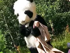Funny, Panda, Teen toy, Funny sex, Teens outdoors, Teens outdoor