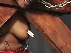 Thủ dâm châu á, Châu á thủ dâm, Cao, Asian thủ dâm