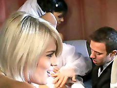 Groomed, Bride, Cbr, Briding, Brideç, B each