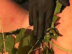 Queensnakes, Queensnake, Fairys, 일본bdsm, Bdsm 노예, Bdsm 日本人