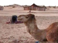 Arabian, Arabians, Camping, طarabian, Arabia, Camp